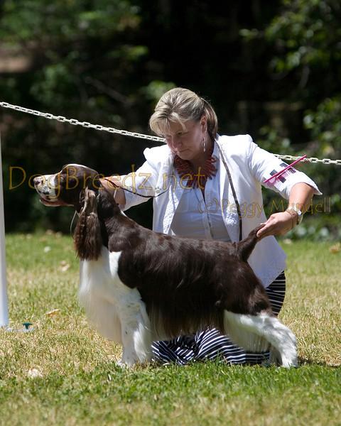 GCESSA Specialty - Winners Dog