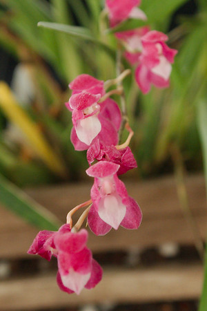 Kathy's Orchids