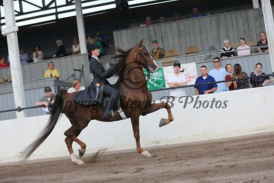 39. Bluegrass Series 3 Gaited Show Pleasure Amateur/Jr. Exhibitor