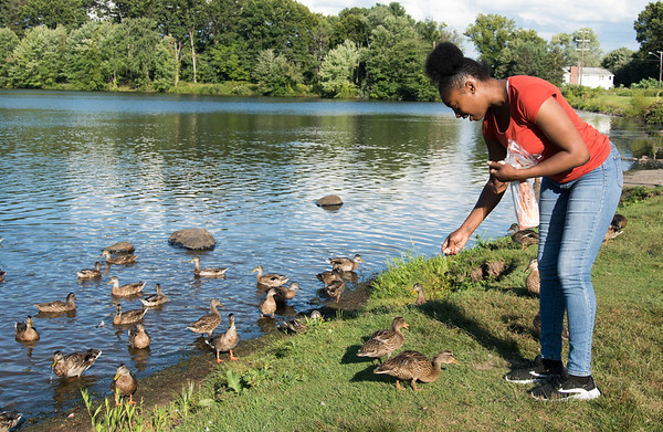09/04/18 Wesley Bunnell | Staff A team of ducks surround Tisonya Dennis of New Britain as she feeds them near the Batterson Pond Park Boat Launch on Tuesday afternoon.