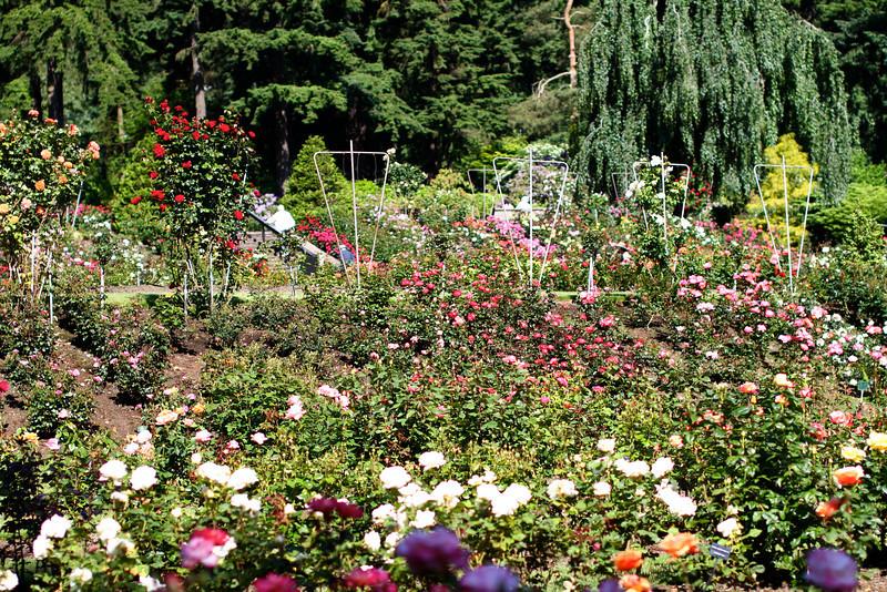 Portland International Rose Test Garden  2220.jpg