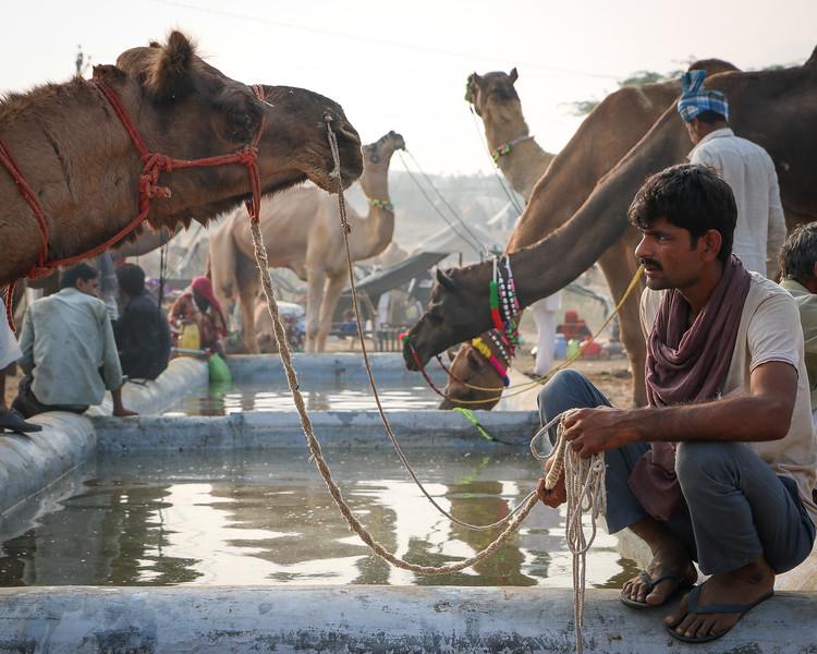 India-Pushkar-2019-8695.jpg