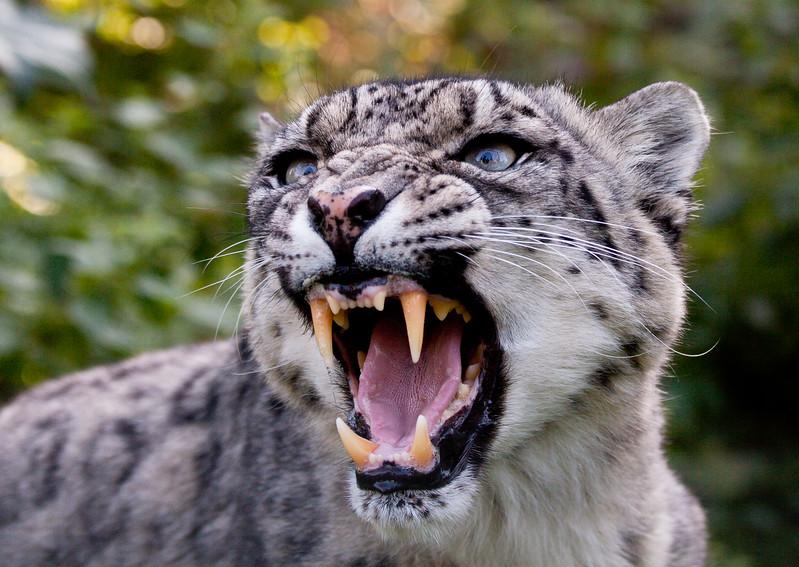 Santago Leopard Project