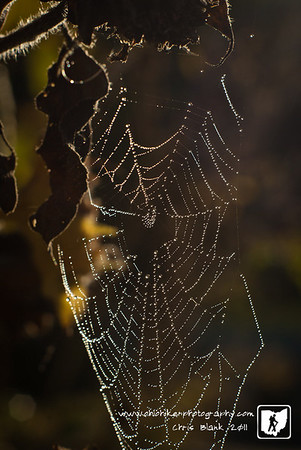 There is nothing like the morning dew on a spider web.  The small droplets refracting the early morning light is amazing.  I looked around for the weaver of this web but was unable find the spider.