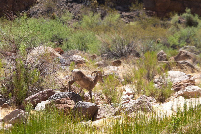 2014_Grand_Canyon_WHDW2_7D 54