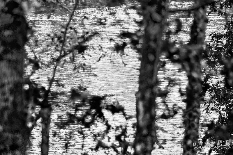 time and the river bw (1 of 1).jpg