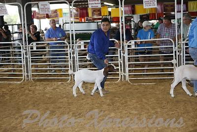 Goat Show Sunday