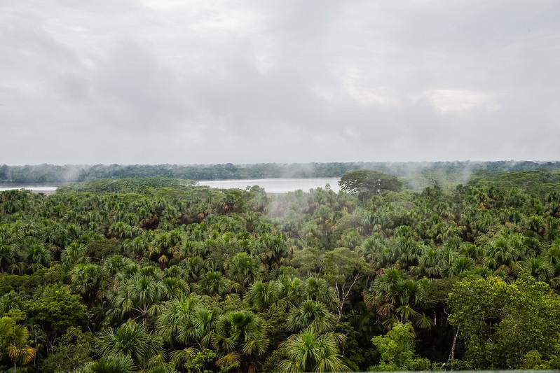Parque Nacional Yasuni - Lina Stock