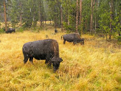 Yellowstone National Park (9.24-25.05)