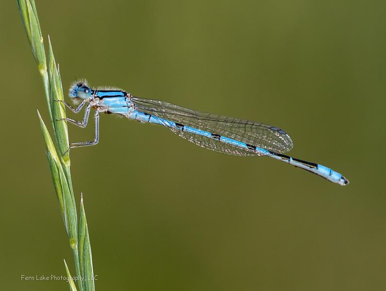 """Blue Jewel"" - Image #A-C7795"