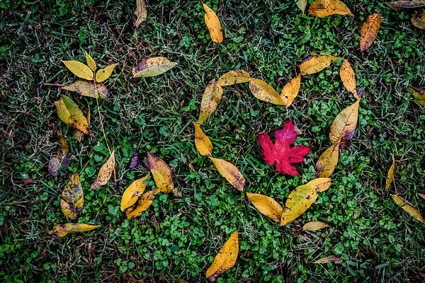 2018-10-26 - Fall leaves