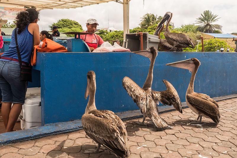 Pelicans_Ordering_Lunch.jpg