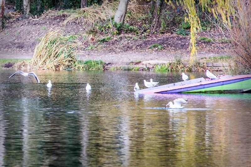 Lliswerry Pond & Park -11.jpg