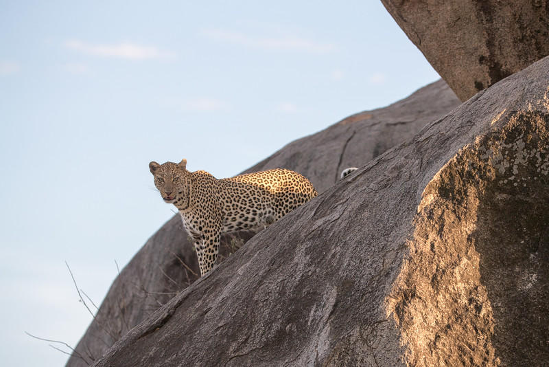 Africa - 101616 - 6684-Edit.jpg