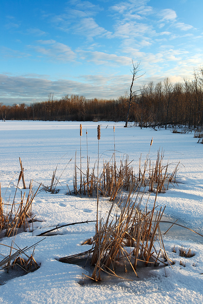 Winter Waterfowl II - U.S. Fish & Wildlife Service Waterfowl Production Area (Lions Den Gorge Nature Preserve - Grafton, WI)