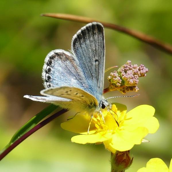 Butterfly P3140462.jpg