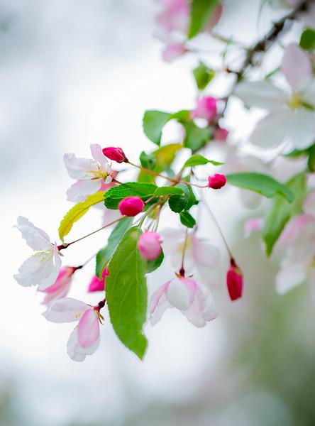 Spring Blossom 2014-39.jpg