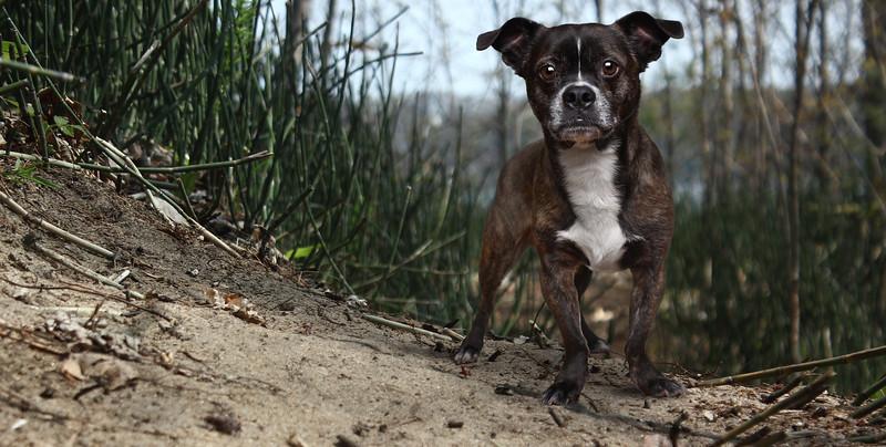 dog-layton.jpg