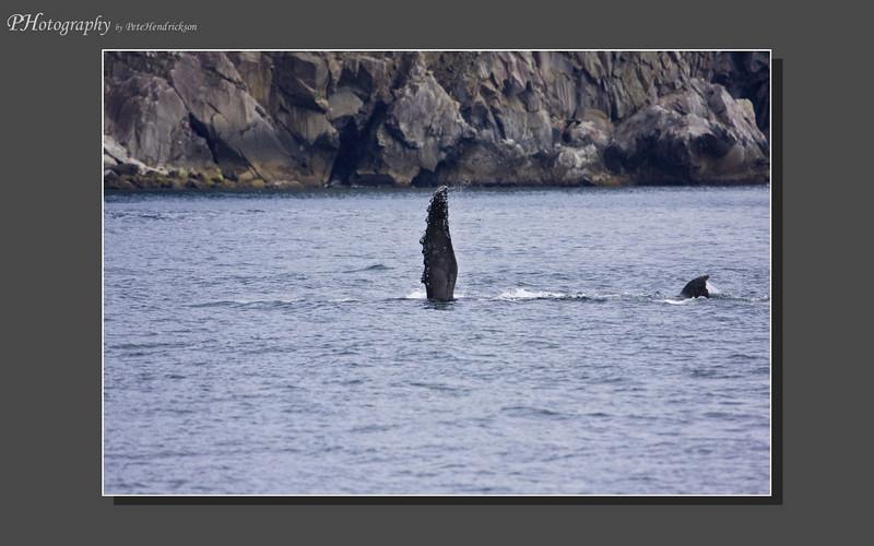 My Alaska 12-08-103.jpg
