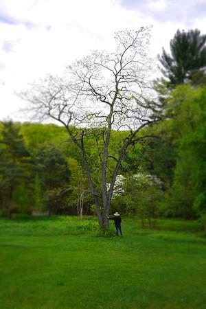 NJ Botanical Garden