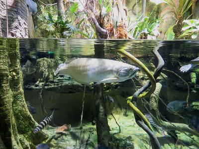 National Aquarium December 2017