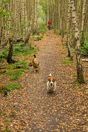 BIRTHDAY DOG WALK