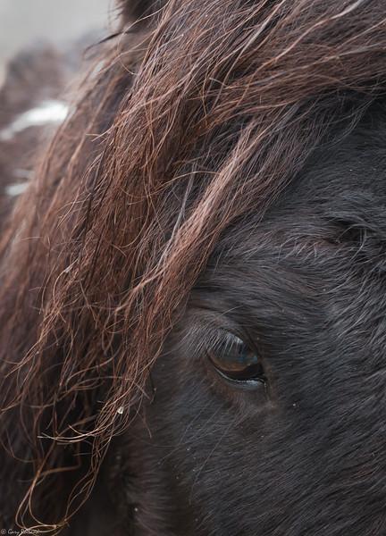 56 Dec 29 Close up  (1 of 1).jpg