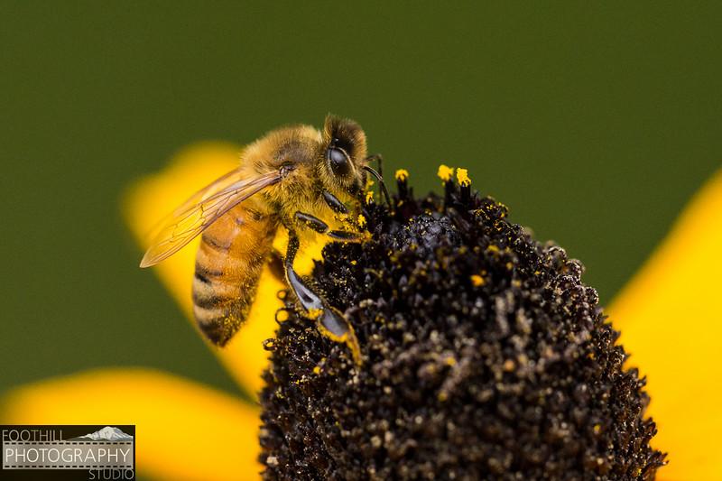 Bee Sml-104.jpg