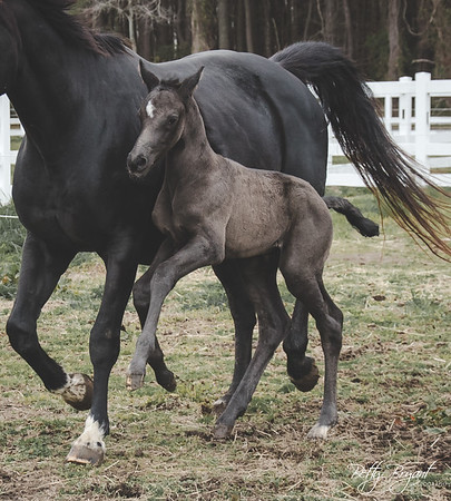Vinny (Roz 2018 Foal)