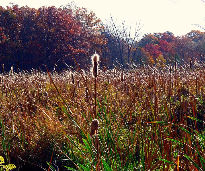 Sawmill Brook meadow, off trail in Brook Farm.