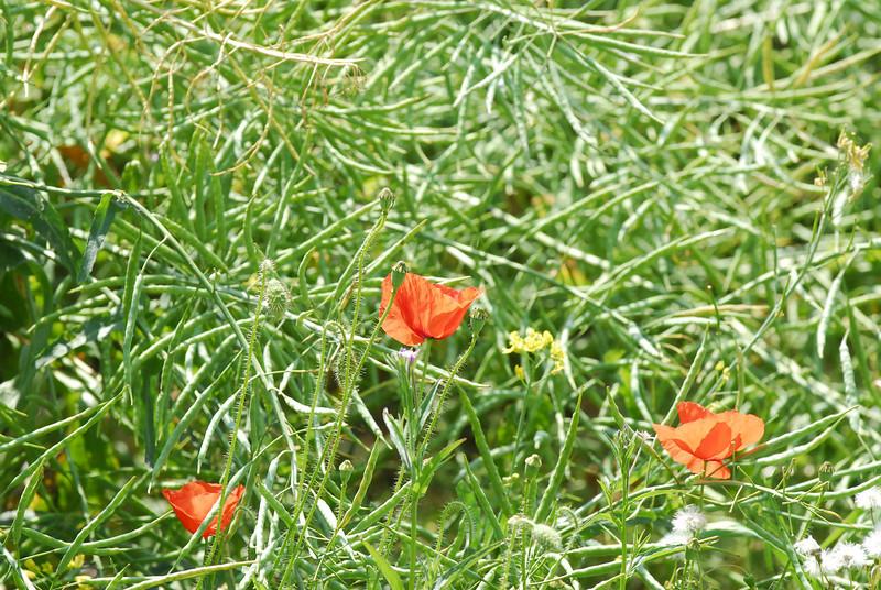 060617 1945 England - Sonning Common - David Yulia Jean Alan Zara _F ~E ~L.JPG