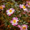 FlowerRedWingPark-005