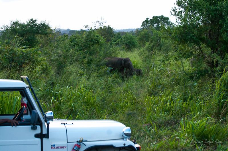 Mom and calve elephants