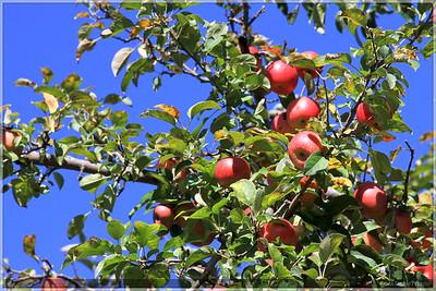 2010 Apple Picking