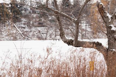 Toronto Winter - High Park - Grenadier Pond