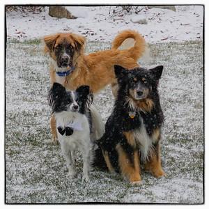 2015-01-06 Snow Dogs