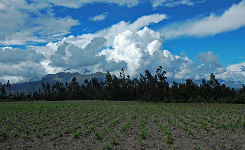Peru Ecuador 2007-014.jpg