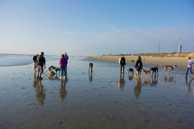 dogs_beach-30.jpg