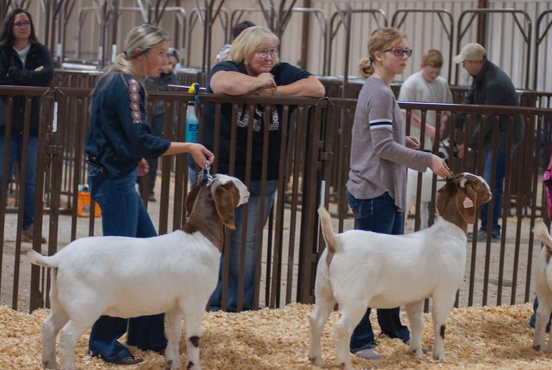 kay_county_showdown_goats_20191207-183.jpg
