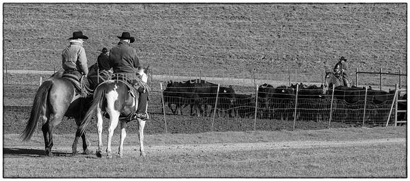 Yolo Land & Cattle Dec 20 2012