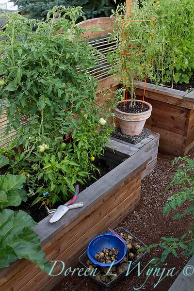 raised bed garden harvest_035.jpg