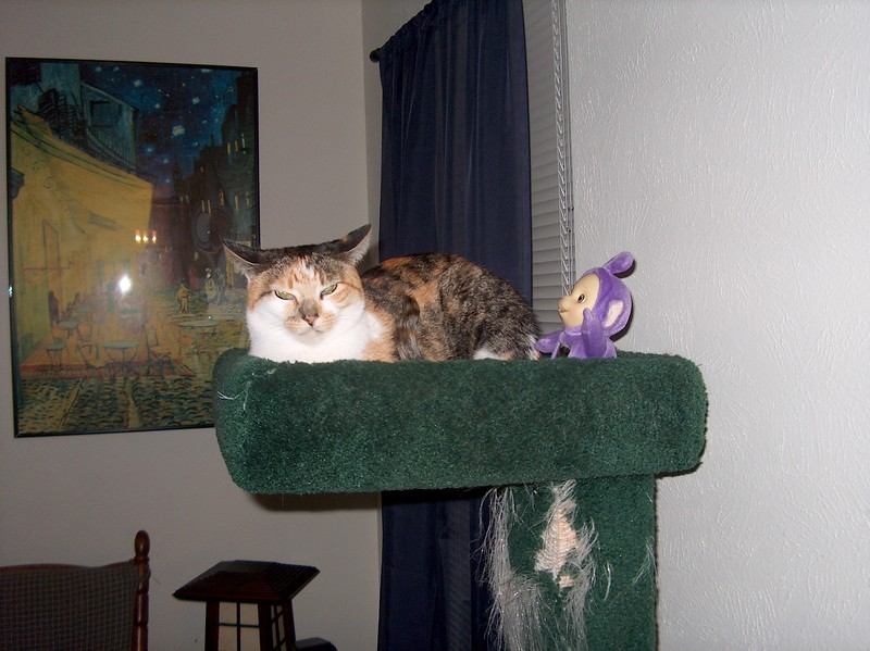 2003 (11)