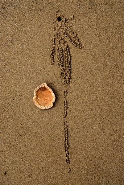 DSC_9372 Sand Burrow shell PS- LL tnef LL +++++.jpg