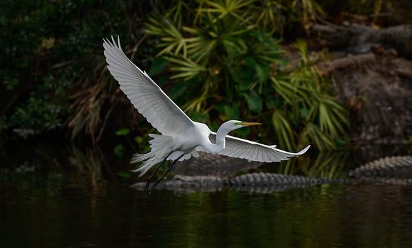 Florida Birds 2013