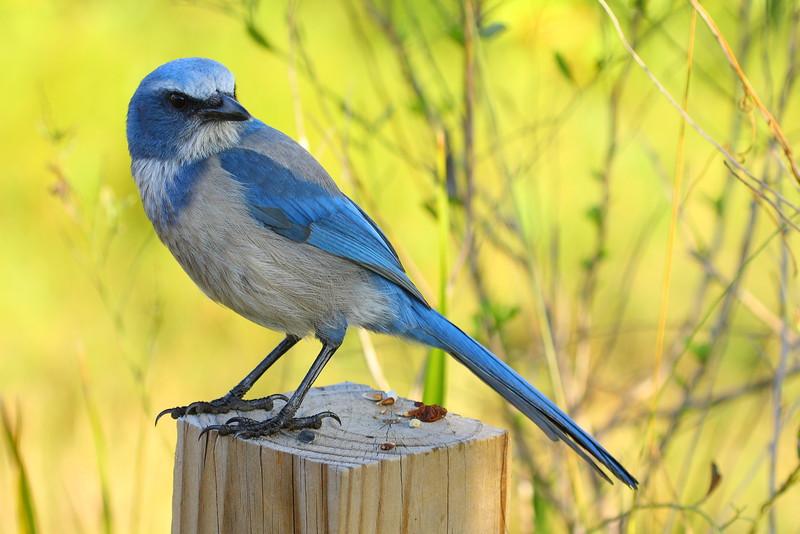 Bird0003.JPG