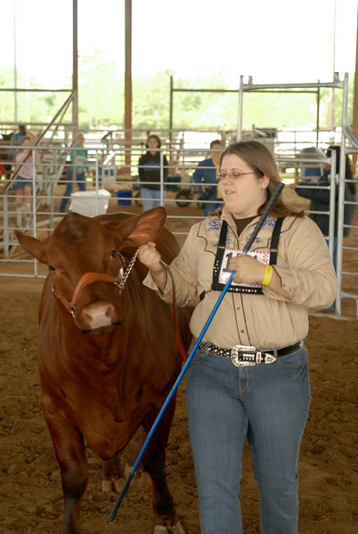 2008 La Porte Livestock Show  04-09-08 Heifer, Steer