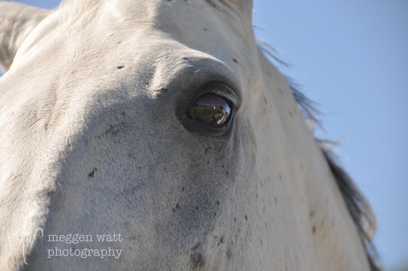 EB&Horses-177.jpg