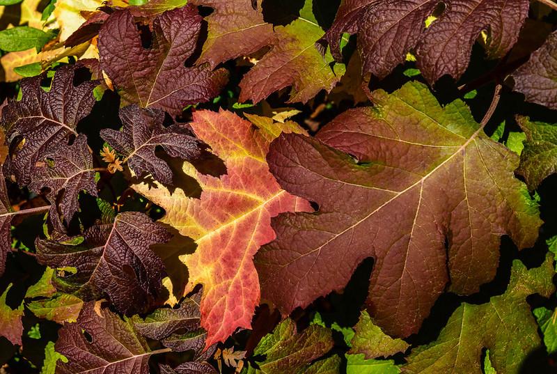 Oct_Leaves-27.jpg