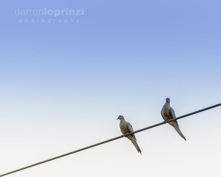 2 birds wm-0755.jpg