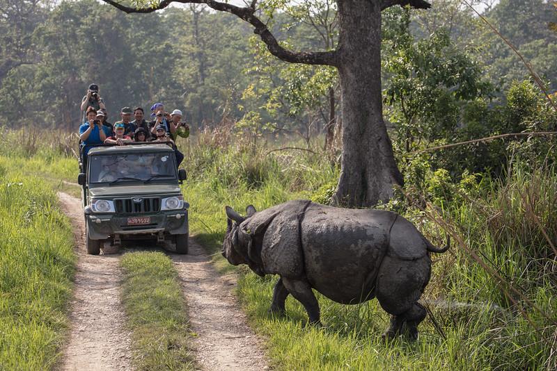 Awkward Crossing of Paths Chitwan, Nepal, 2017 copy.jpg